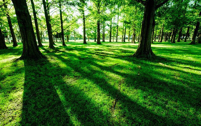 自然から日差しがきれいな画像